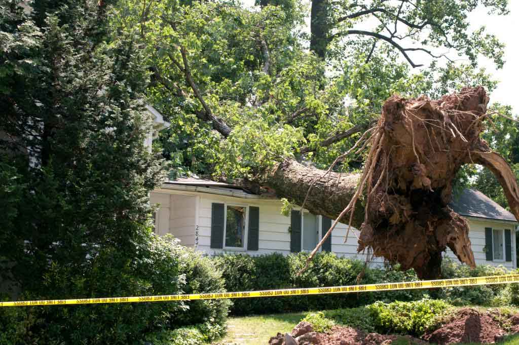 Tree Damage Insurance Claim Attorney